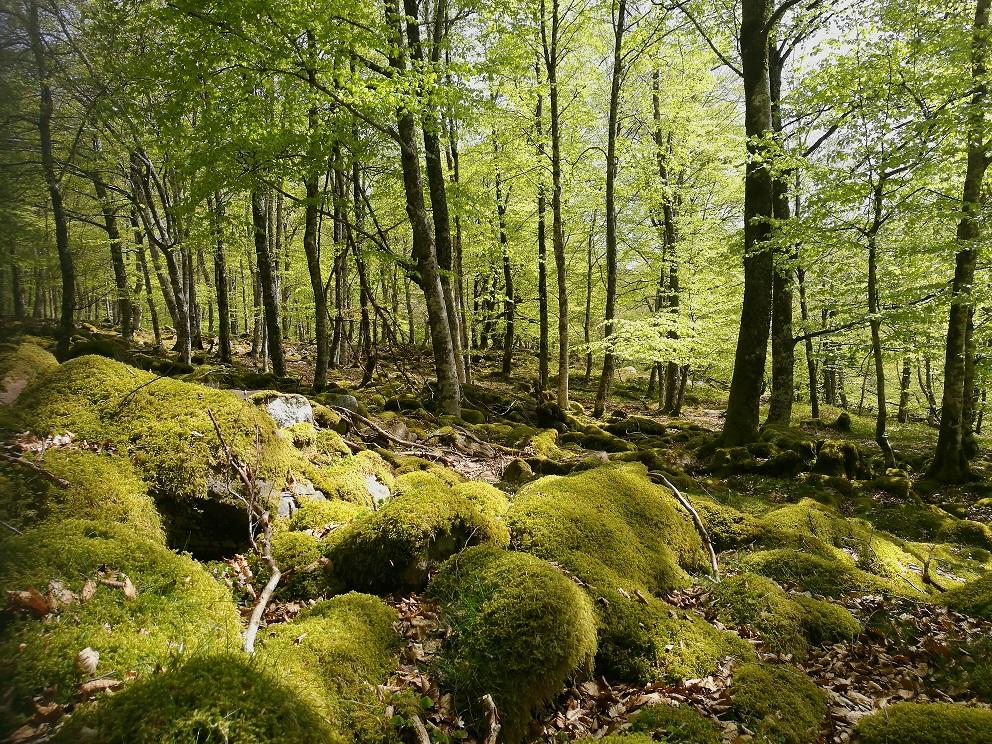 Sierra de Urbasa Andía